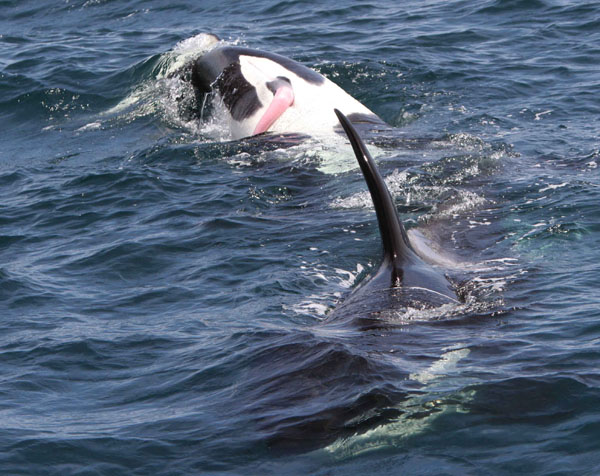 Image Gallery male whale
