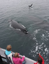 friendly humpback whale next to boat