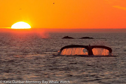 Humpback Whales at Sunset, photo by Katie Dunbar