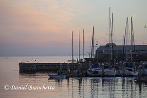 Peaceful harbor in early morning, photo by Daniel Bianchetta